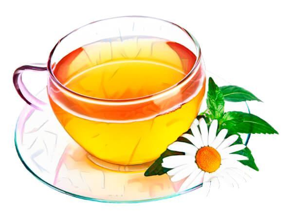 Infusions et tisanes